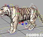 一个MAYA老虎绑定模型,练练四足