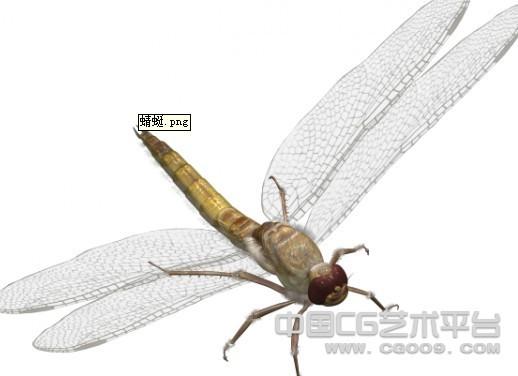 超精细蜻蜓模型下载(带贴图)