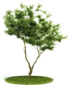 小树3D模型下载