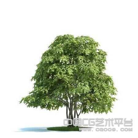 高精红豆树3D模型下载  高精3D模型下载