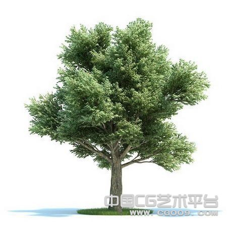 高精大型树木3D模型下载   高精模型下载
