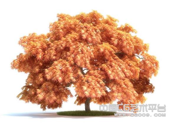 红色枫叶树3D模型下载  风景树3D模型下载