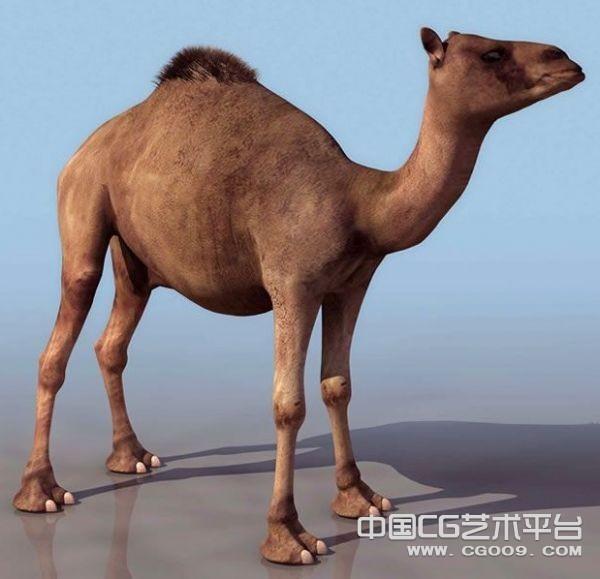 沙漠之王  3D骆驼模型下载  骆驼3D模型下载