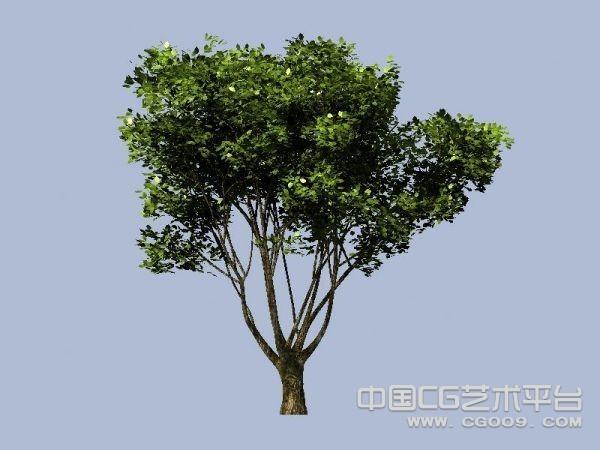 一棵很好的树木模型下载  大树3D高模下载
