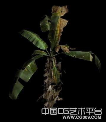 很不错的香蕉树3D模型下载