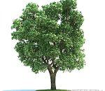 多种风景树木3D模型下载