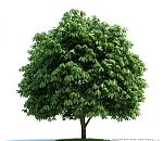 3d风景树木模型下载  灌木模型  树木模型