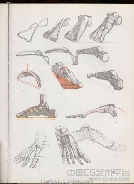 人体艺用人体解剖绘画素材-人体骨骼绘画素材