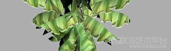 写实香蕉树3d模型下载