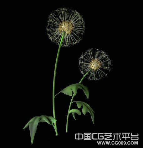 蒲公英植物模型下载
