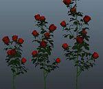 很不错的玫瑰花模型下载