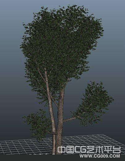 分享一颗大树maya模型带贴图