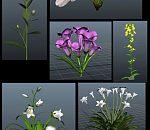 6种比较常用的花草植物maya模型有贴图