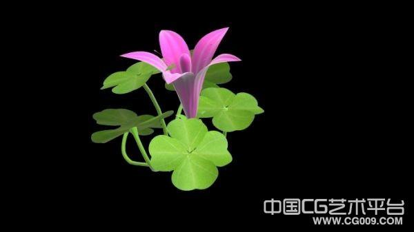 四叶草带花模型 有贴图