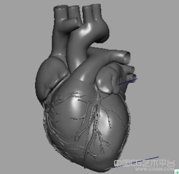 写实人体心脏模型下载 带跳动动画