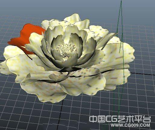 牡丹花模型下载