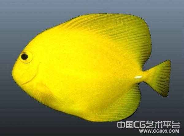 金黄色扁鱼3d模型下载