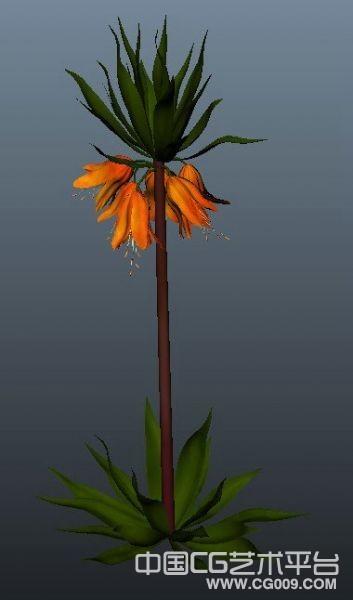 一个开花的植物模型