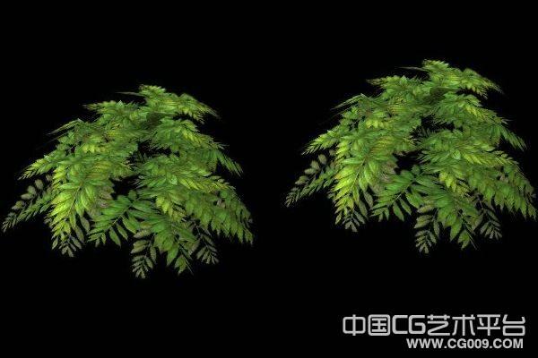3d灌木模型下载