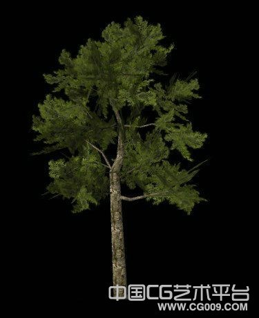maya风景树木模型下载