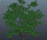 maya写实橘子树模型下载