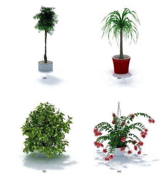 一批景观盆栽树木模型下载