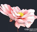 一朵很写实的花朵模型下载