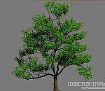 写实树木模型 高模型 带贴图