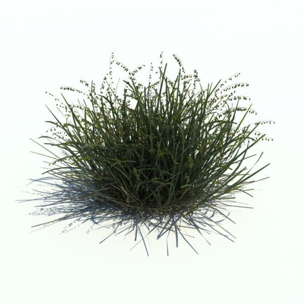 高品质花草3d植物模型下载