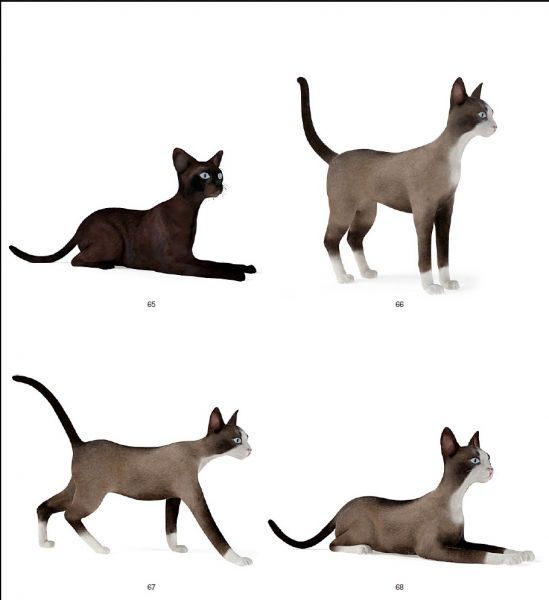 一只漂亮的猫 带动作模型下载