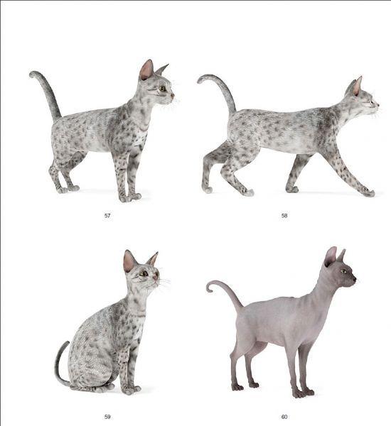 三只猫3d精品模型 有绑定 带动作模型