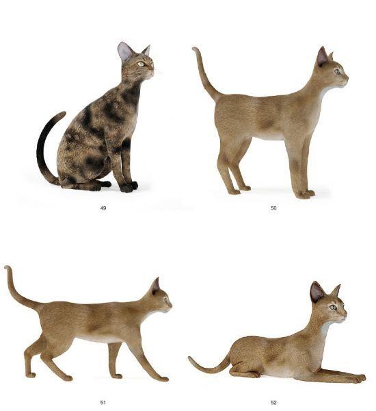 再发几只漂亮的猫模型 带动作