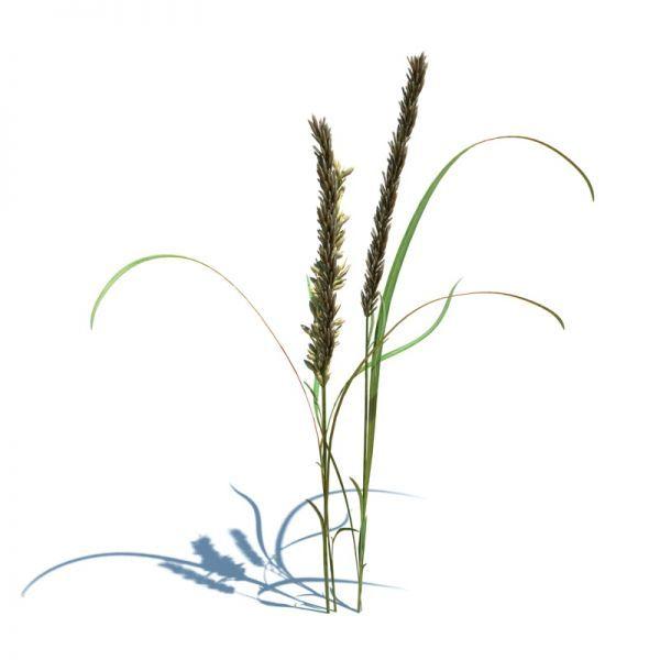 高品质野草3d模型下载