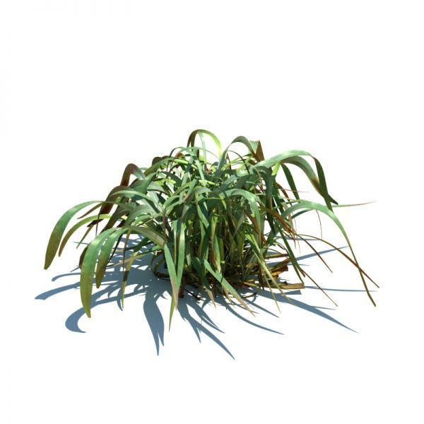 芦苇3d植物模型下载