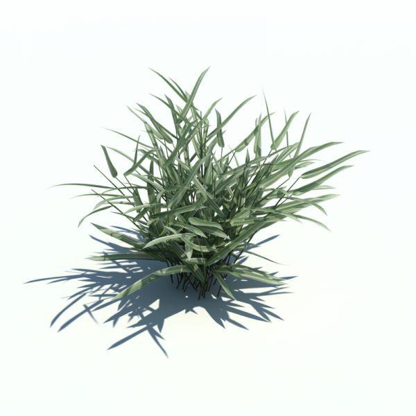 3d景观花草植物明细哦下载
