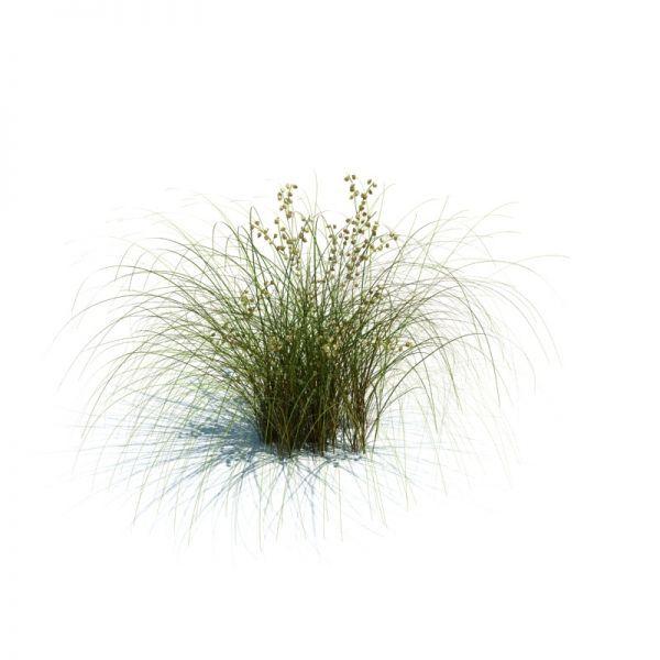 3d花草模型 有季节变化的植物模型变化
