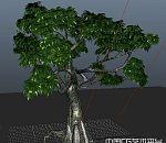 写实3d树木模型下载