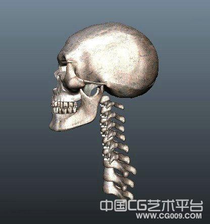 maya骷髅头骨头模型,头骨模型