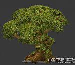 一颗游戏里面的大树3d模型下载