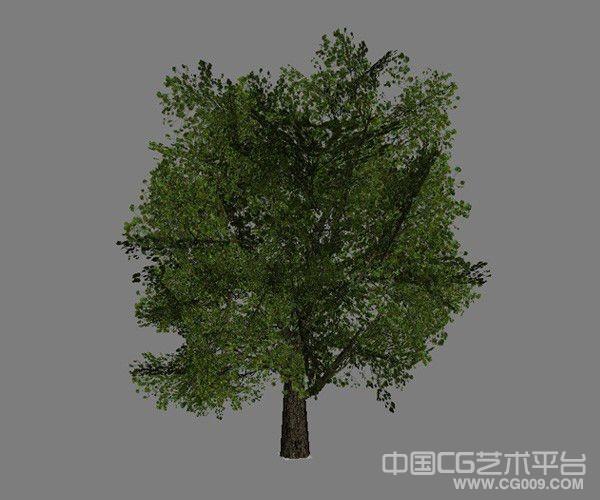 6棵实用的3d树木模型下载  带贴图