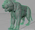 老虎maya模型下载  maya老虎模型 布线不错的老虎