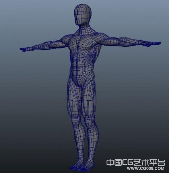 maya男人肌肉布线模型下载 3d肌肉人体模型下载