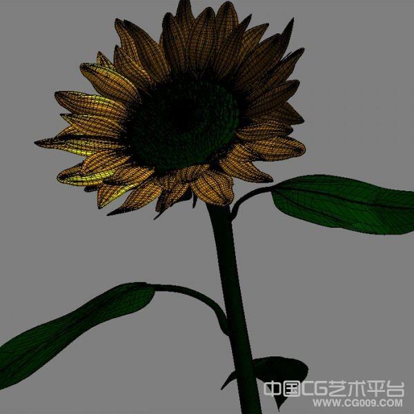 向日葵3d模型下载  有max obj两种格式