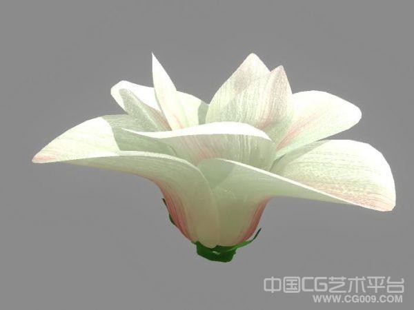 maya写实花瓣模型 带材质贴图