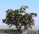 紫金花树木粉红色花树3d花紫丁香3d模型下载