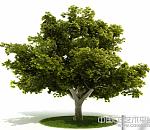树叶茂盛的大树绿叶树风景树高模下载