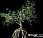 热带树木根景观树3d模型下载写实树木模型