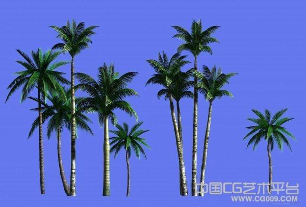 热带树木模型下载  3D椰子树模型下载