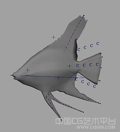 绑定好的maya热带鱼扁鱼模型下载