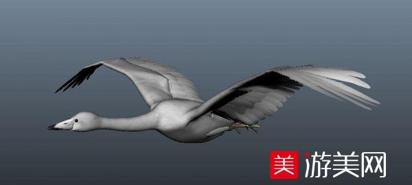 漂亮的maya绑定天鹅白天鹅白色大鸟白鹤模型下载